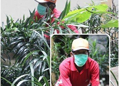Gardener Dan Tukang Kebun